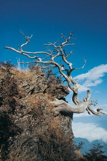 Bare Tree, Blue, Cloud, Day, Hill : Stock Photo