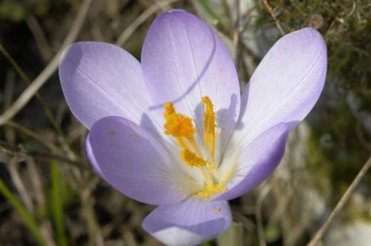 Stock Photo: 4029R-404180 felder, wiesen, berne, blooms, blumenrfarben, botany, colored