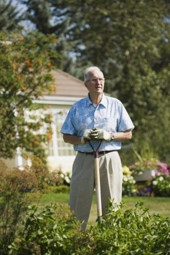 Stock Photo: 4029R-405524 Senior gardener
