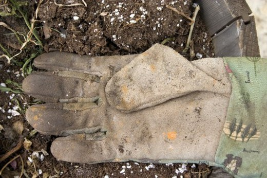 Stock Photo: 4029R-405841 Well worn gardeners glove resting in a pot ready to be planted