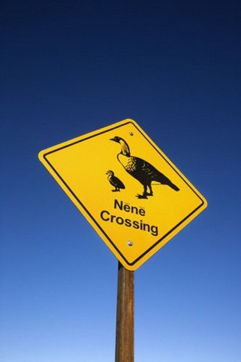 Stock Photo: 4029R-407002 Shot of  Nene Crossing  road sign in Haleakala National Park, Maui, Hawaii.