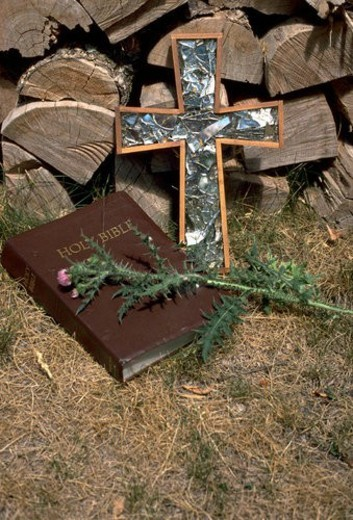 Stock Photo: 4029R-407992 Thistle Bible Cross and woodpile