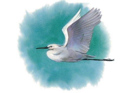 bird, painting, watercolor : Stock Photo