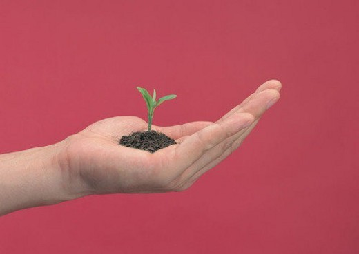 Stock Photo: 4029R-415803 fingers, palm, soil, hand, seeding, plant
