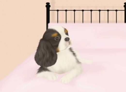 Cavalier King Charles Spaniel lying on bed, front view, pink background : Stock Photo