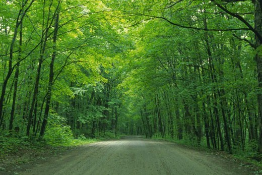a Road, Surrounded By a Lot of Trees, Standing on the Side, Front View, Algonquin, Canada : Stock Photo