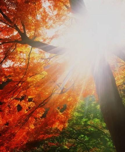 Stock Photo: 4029R-424151 Autumn leaves