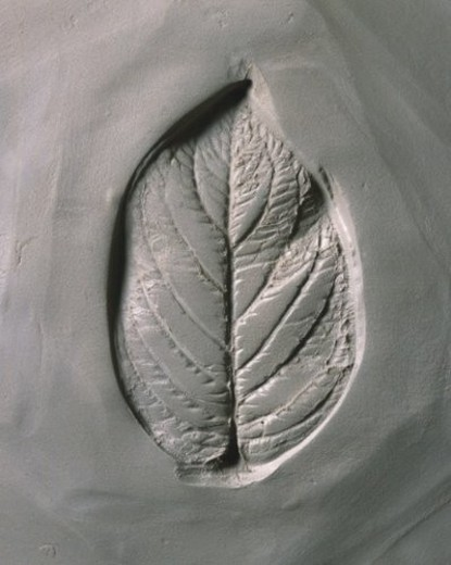 Stock Photo: 4029R-425077 Plaster Craft of Leaf, High Angle View