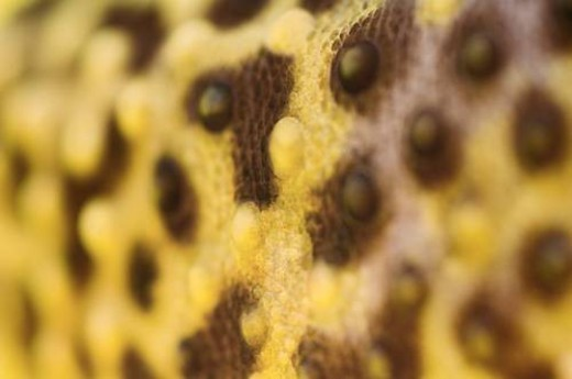 Close Up Of Leopard Gecko Skin Patterns : Stock Photo