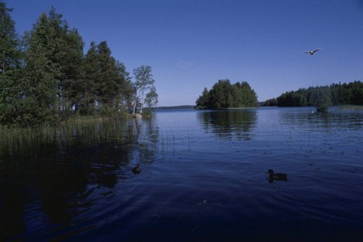 Stock Photo: 4029R-433197 A Forest And A Lake