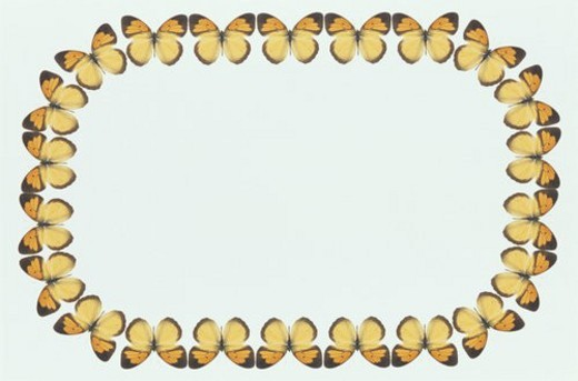 The Square Frame Of A Butterfly : Stock Photo