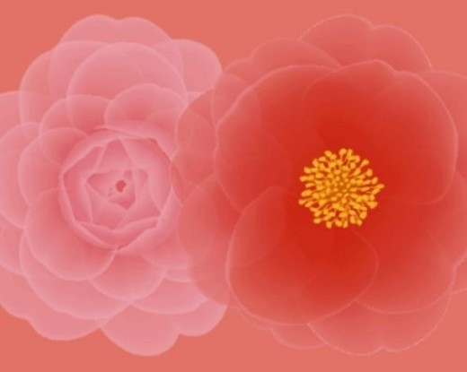 Stock Photo: 4029R-441526 Closed Up Image of Two Different-colored Camellias, Illustration, Illustrative Technique