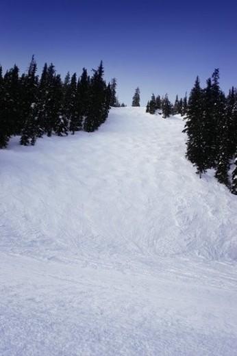 Stock Photo: 4029R-442132 Ski hill