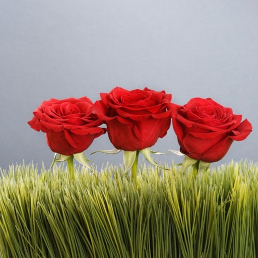 Three red roses growing out of artificial green grass. : Stock Photo