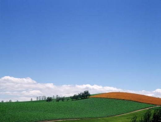 Stock Photo: 4029R-445001 Grasslands in Biei-Machi, Hokkaido, Japan