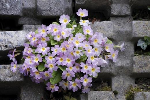 barrier, blooms, bonny, breakup, concrete, descent, fascinating : Stock Photo