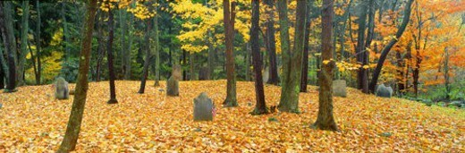 Noah Phelps grave in Revolutionary War cemetery in Autumn, Austerlitz, New York : Stock Photo