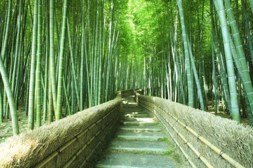 Stock Photo: 4029R-5633 Footpath in Bamboo Grove