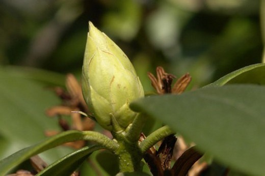 felder, wiesen, berne, blooms, botany, colored : Stock Photo