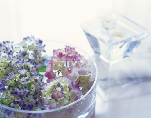 Stock Photo: 4029R-64687 Hydrangea in Flat Vase, Close Up, High Angle View, Differential Focus, In Focus, Out Focus