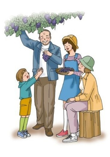 Grandparents and grandchildren picking grapes, Illustration, Front View, Side View : Stock Photo
