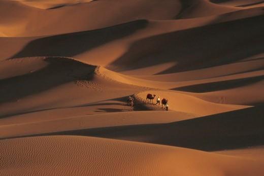 Camels walking across desert, Sinkiang : Stock Photo