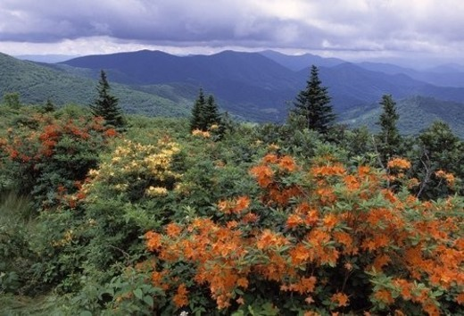 Stock Photo: 4029R-67190 Colorful plants with mountain scenery