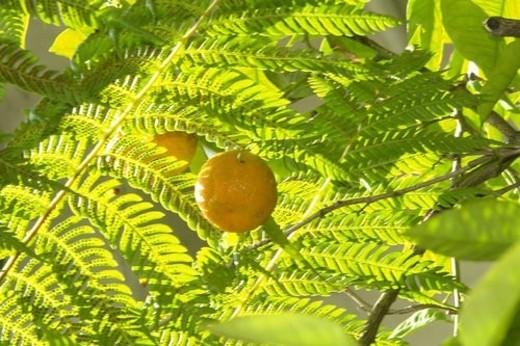 felder, wiesen, berne, blooms, blumenrfarben, botany, citronen : Stock Photo