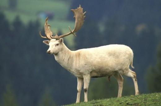 beige, cervidae, brown, animals : Stock Photo