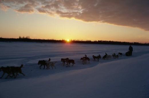 Stock Photo: 4029R-75253 Dog Sled