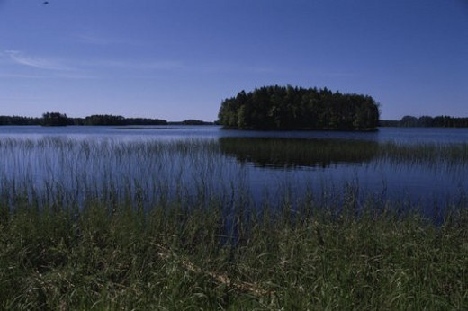 A Forest And A Lake : Stock Photo