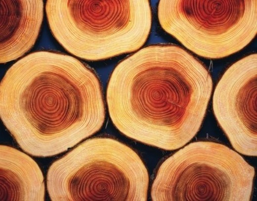 Stock Photo: 4029R-82829 Photography of logs of Japanese cypress, Close Up