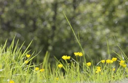 Stock Photo: 4029R-8356 Wildflowers
