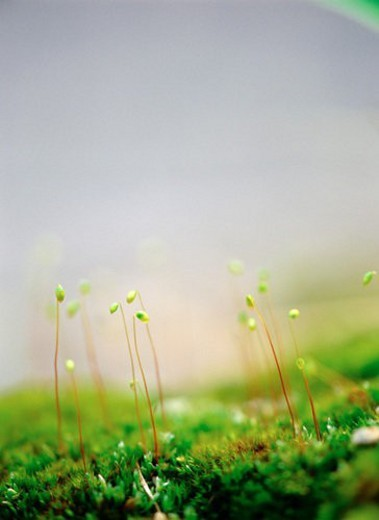 Stock Photo: 4029R-84799 sprout, nature, spring, season, plant, film