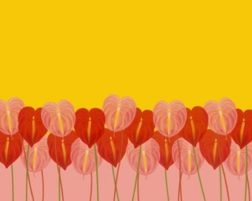 Closed Up Image of Several Red and Pink-colored Anthuriums In Front of a Yellow and Pink Surface, Front View, Illustration, Illustrative Technique : Stock Photo