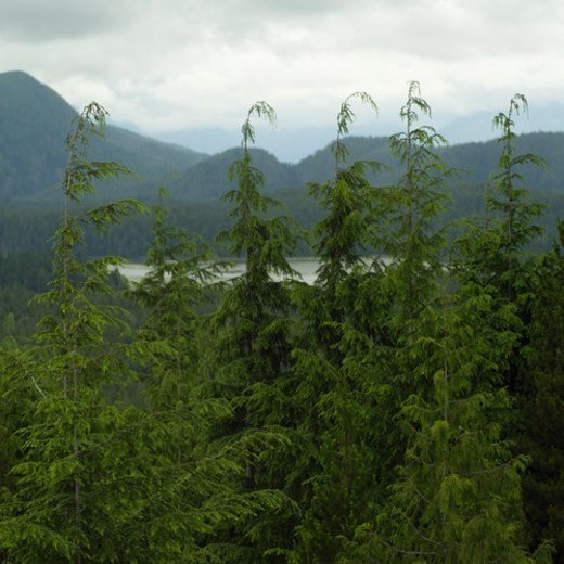 Scenic view from Radar Hill Trail, Pacific Rim National Park, Vancouver Island, Canada : Stock Photo