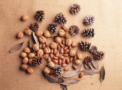 Still life of pine cones, walnuts and acorns : Stock Photo