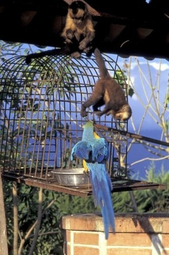 Stock Photo: 4029R-96985 Cage, trip, Bird, Group, Fauna, Monkey, Adventure