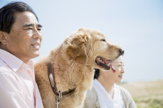 Japanese Senior Husband And Wife And A Dog : Stock Photo