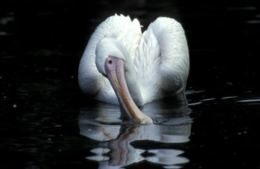 federn, animals, aves, beak, bill : Stock Photo