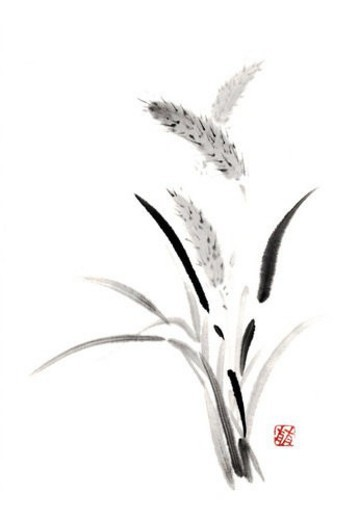 Stock Photo: 4029R-99488 Bristle grass, ink brush painting, white background, cut out