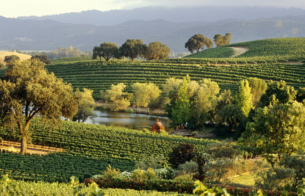 Stock Photo: 4030-2228 Quintessa Vineyard, Napa Valley, California, North America