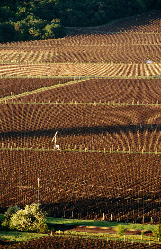 Stock Photo: 4030-2243 Vineyards, Napa Valley, California, North America