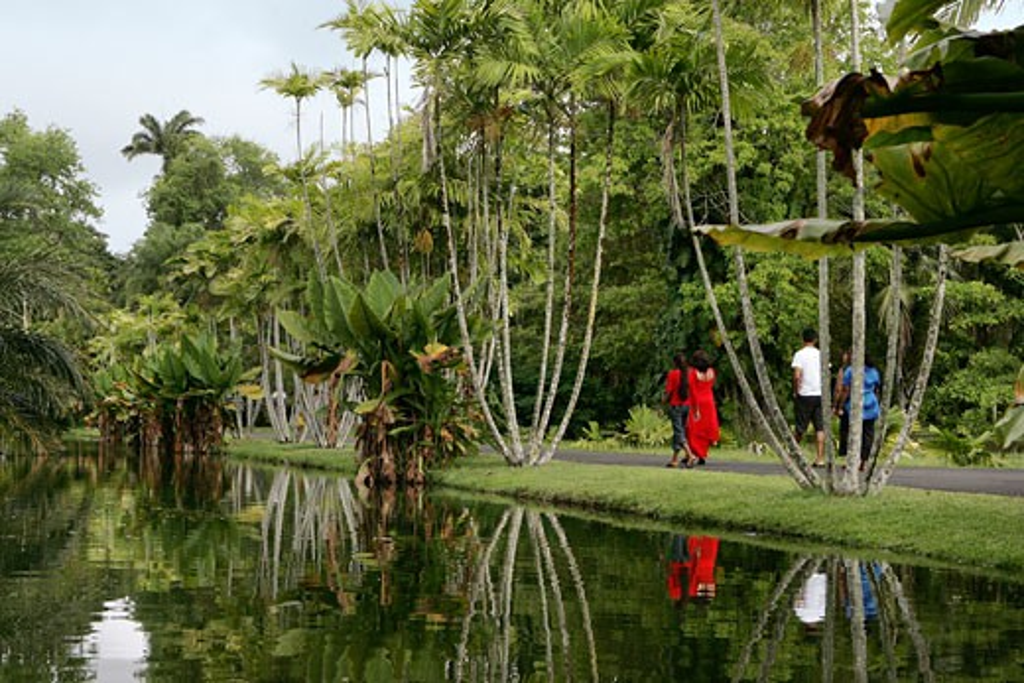 Sir Seewoosagur Ramgoolam Botanical Gardens, Pamplemousses, Mauritius : Stock Photo