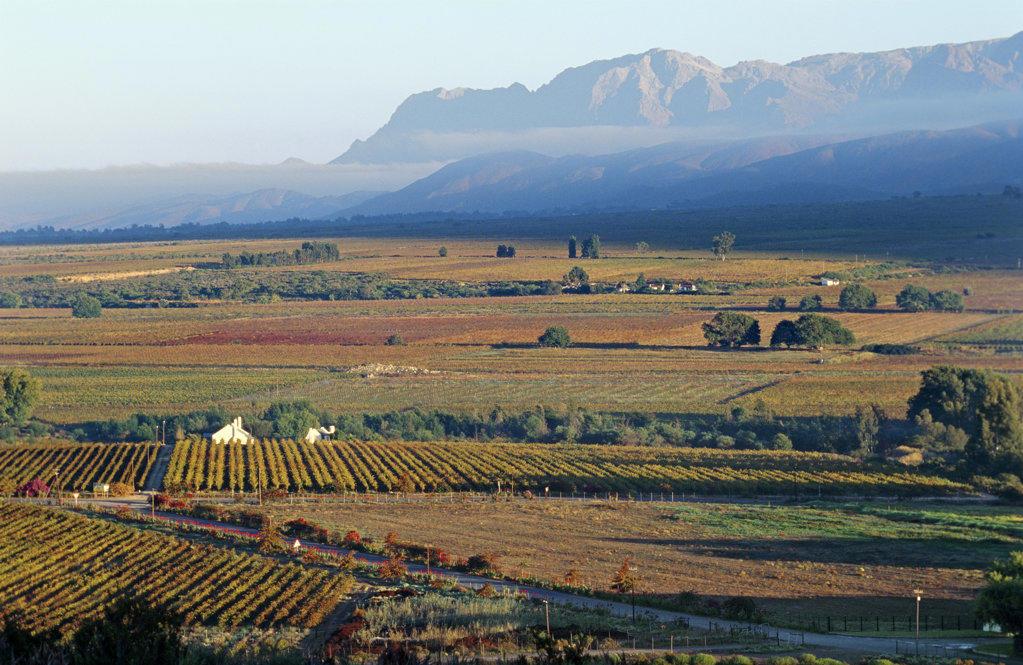 Cape Wine Route, Hex River Valley, Western Cape : Stock Photo
