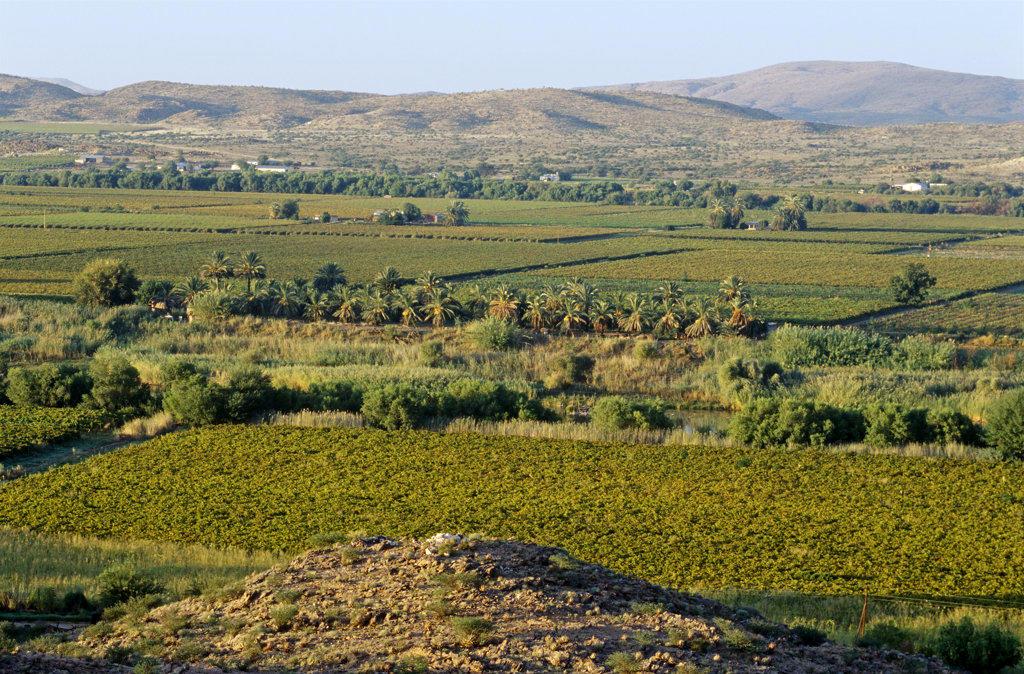 Cape Wine Route, Northern Cape : Stock Photo