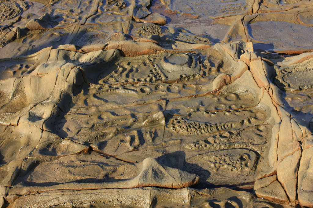 Rocks with Fossils, Wild Coast, South Africa : Stock Photo