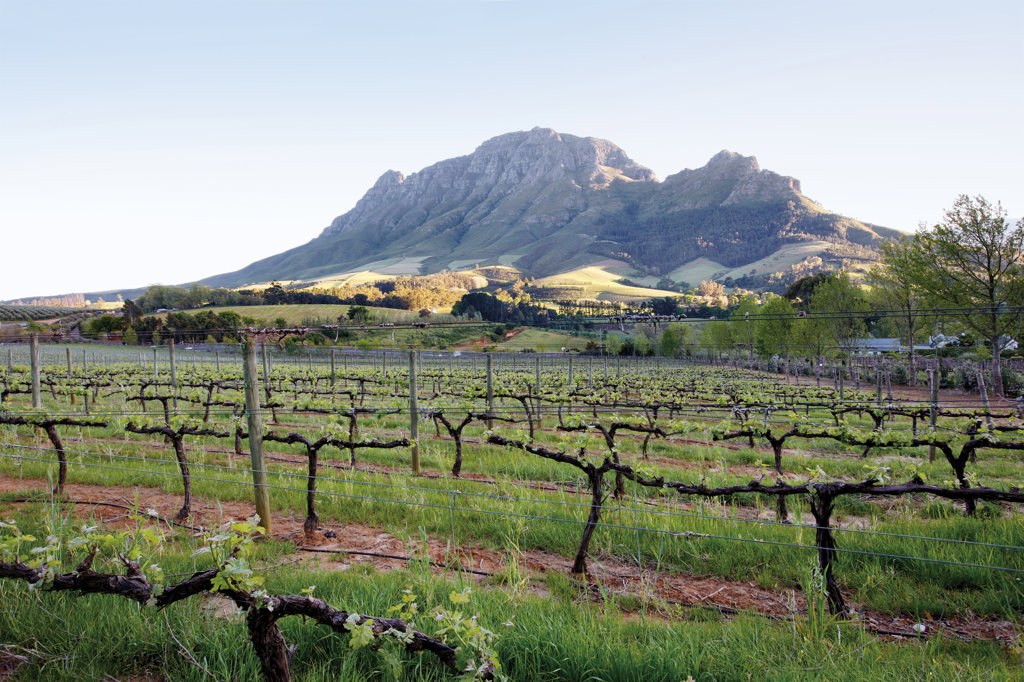 Stock Photo: 4030-5624 Delaire Winery, Stellenbosch, South Africa