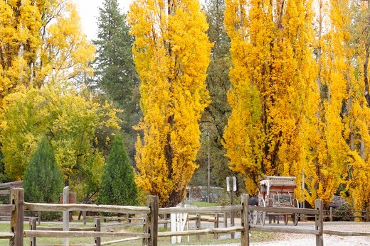 Stagecoach in a park, Main Street, Columbia State Historic Park, Columbia, Tuolumne County, California, USA : Stock Photo