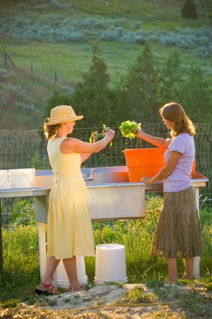 Stock Photo: 4033-190A Two young women washing lettuce leaves, Bozeman, Gallatin County, Montana, USA